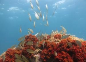 zona-gencat-inmersion-piscis-diving