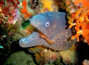 les-coves-zona-de-inmersion-piscis-diving