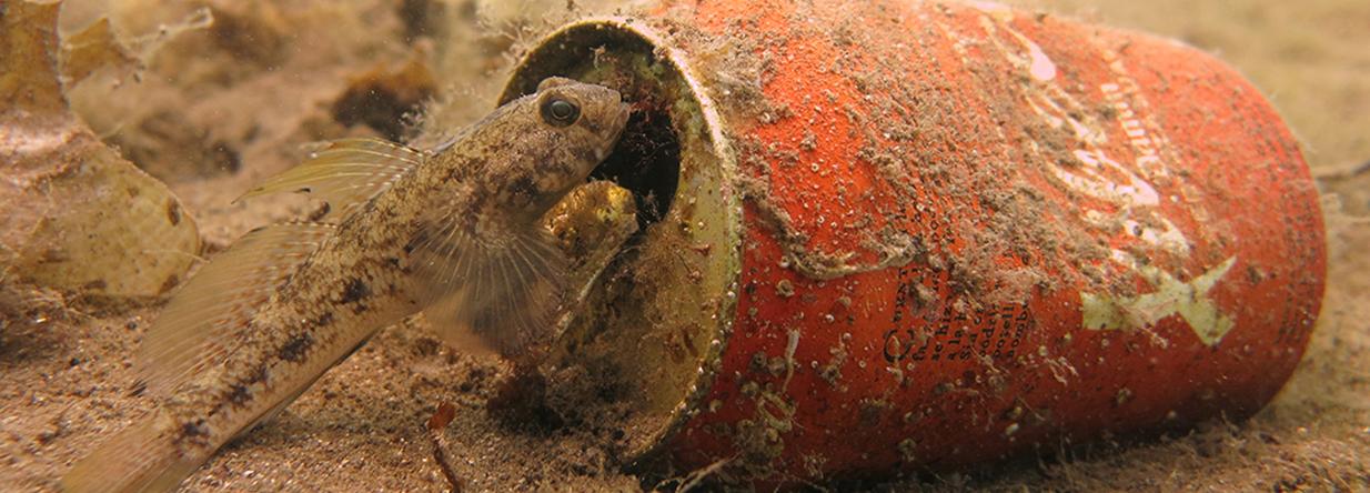 imagen-limpiezaFONDOS-piscisdiving-com