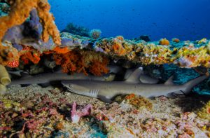 indonesia-buceo-viajes-diving