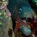 Fran Gomez Piscis Diving (36)