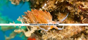 bucear-costa-brava-submarinismo-buceo