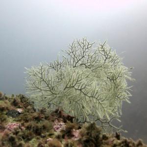 zonas de inmersion pisci diving