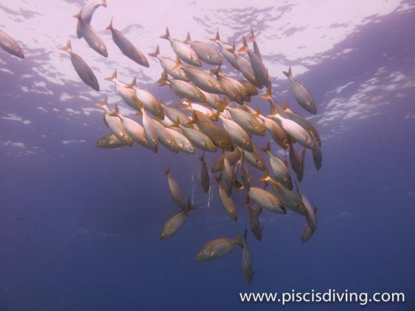 Bautizo submarino – Costa Brava