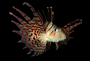curso-practico-fotografia-submarina-carlos-mingell