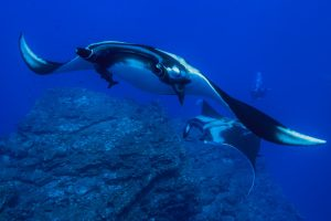 viajes-buceo-mexico-diving-costa brava-bucear-submarinismo