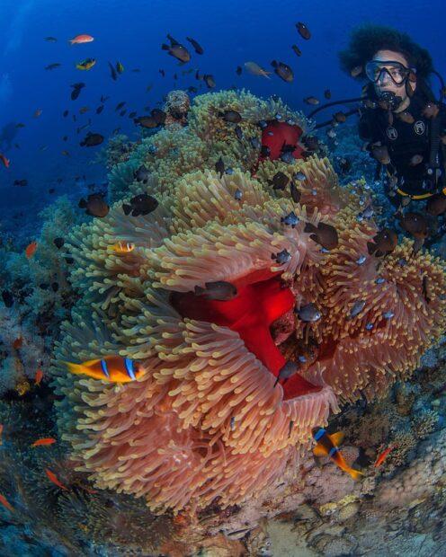 Descubre la belleza de bucear mar rojo
