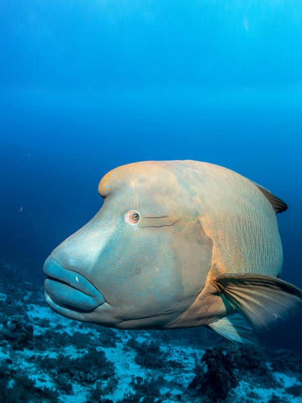 Vida marina mar rojo buceo