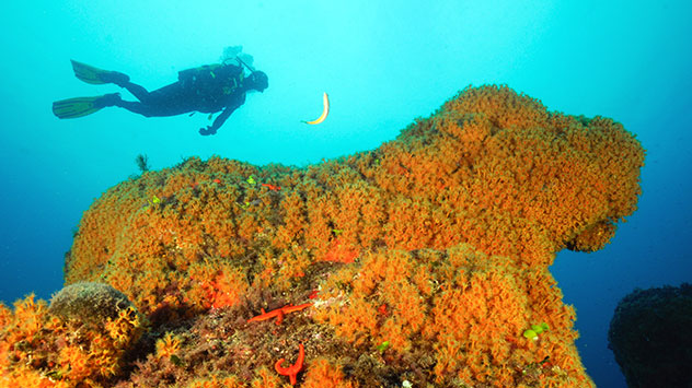 zona de inmersion costa brava Piscis Diving