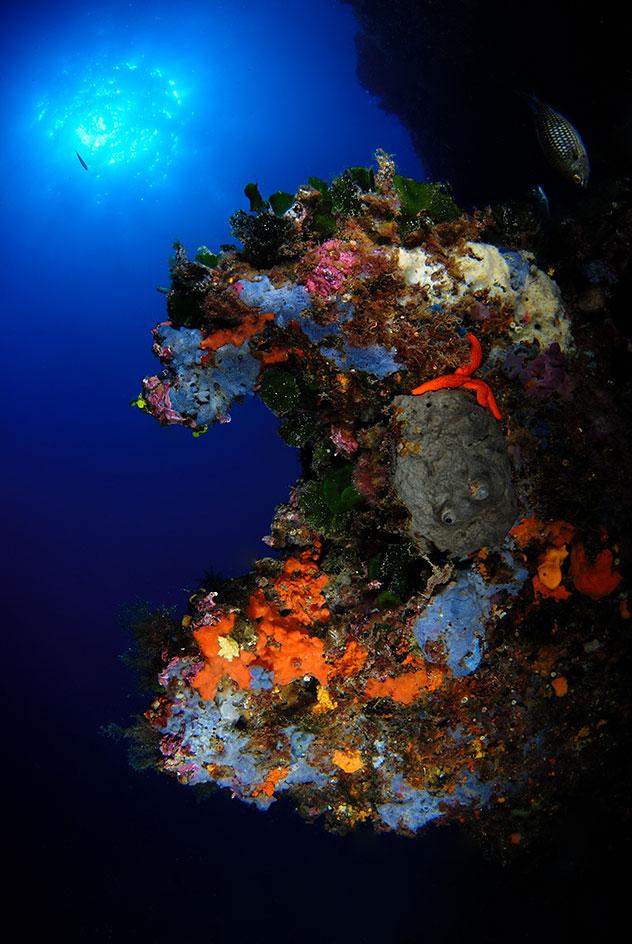 zonas de inmersion piscis diving costa brava